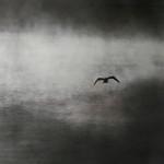 """Flying Egret, Silver Lake"", giclee print. (c)Ken Green."