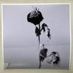 """The Dead Rose Cobweb Affair"", photograph. (c)Colleen Surprise Jones."