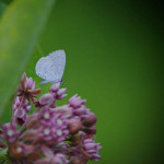 """""""Spring Azure"""", photograph. (c)Catherine Fennelly."""