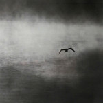 """Flying Egret, Silver Lake"", giclee print. (c)Ken Green."